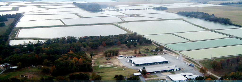 Harry Saul Minnow Farm